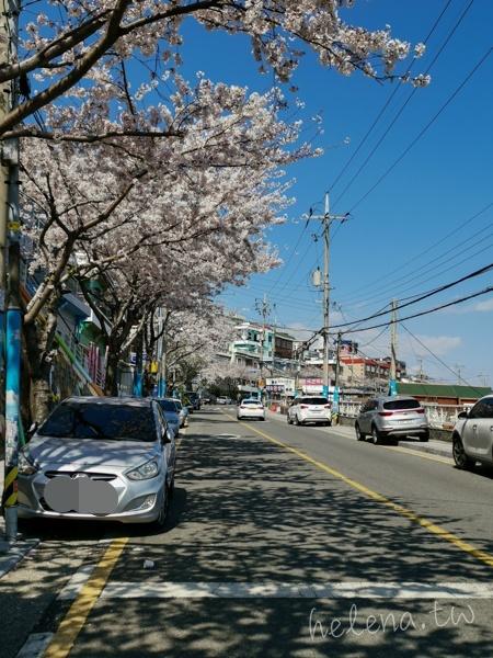 釜山賞櫻花,釜山遊/宿,韓國旅行 @Helena's Blog