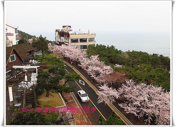 景點,櫻花,迎月嶺,釜山,韓國 @Helena's Blog