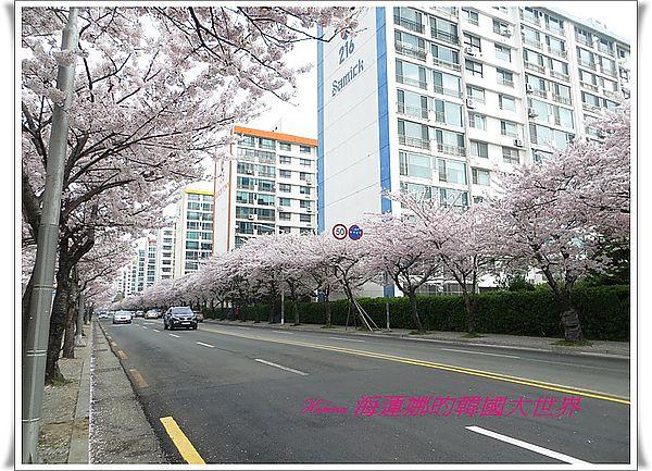 南川洞,地鐵,廣安大橋,景點,賞櫻,釜山,韓國 @Helena's Blog
