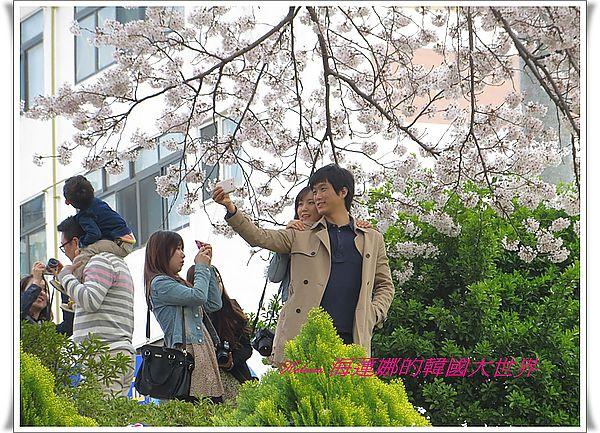 地鐵,景點,櫻花,溫泉川,釜山,韓國 @Helena's Blog