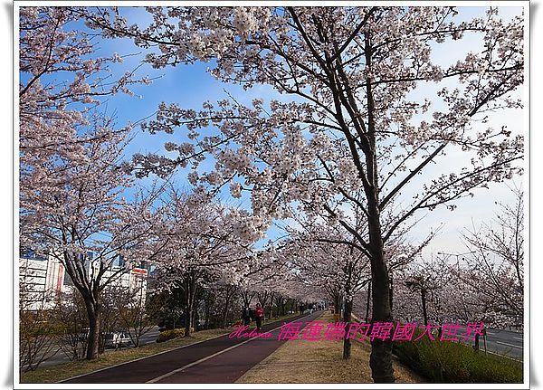 三樂,地鐵,景點,櫻花,洛東江,釜山,韓國 @Helena's Blog
