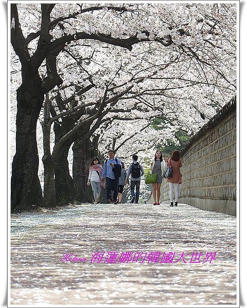 大陵院,慶州,石牆路,韓國 @Helena's Blog