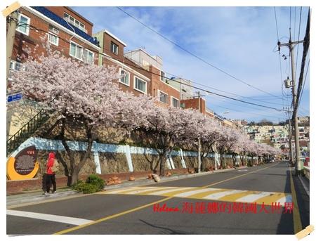 景點,櫻花,釜山,韓國 @Helena's Blog