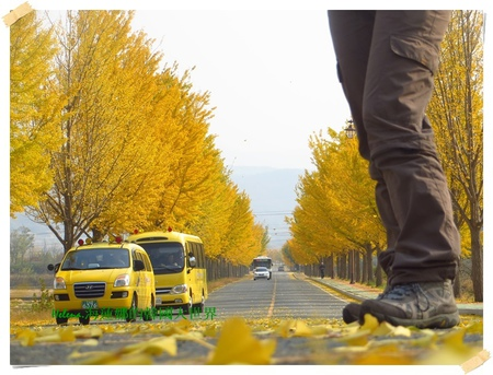 慶州,統一殿,銀杏,韓國 @Helena's Blog