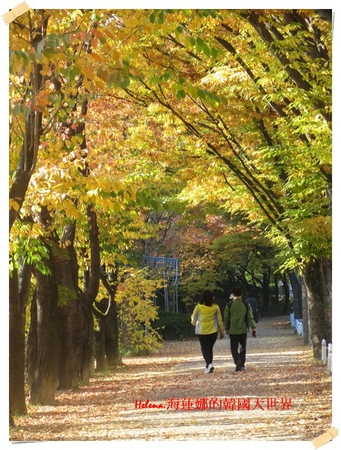 慶州,普門湖,楓葉,落葉,銀杏,韓國 @Helena's Blog