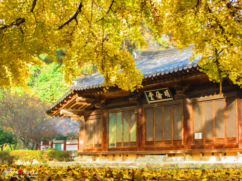 多彩節,大邱,大邱遊/宿,炸雞啤酒節,綜合,韓國,韓國旅行,首爾 @Helena's Blog