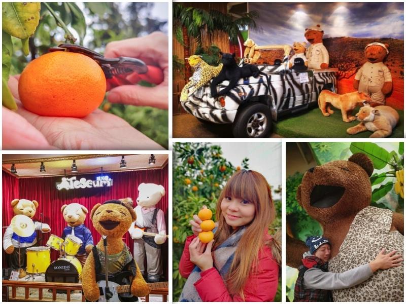 小橘子,景點,泰迪熊,濟州島,濟州島遊/宿,韓國,韓國旅行 @Helena's Blog